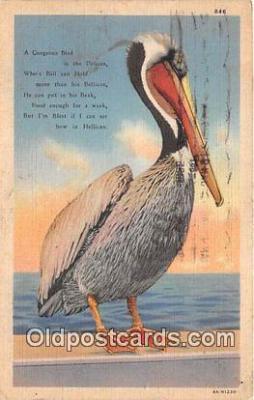 yan170011 - Pelican Postcard Post Card