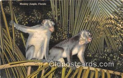 yan190013 - Florida, USA Monkey Jungle Postcard Post Card