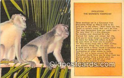 yan190015 - Evolution, Monkeys Viewpoint Postcard Post Card