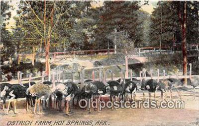 yan210033 - Hot Springs, Ark, USA Ostrich Farm Postcard Post Card