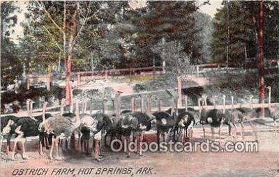 yan210044 - Hot Springs, Ark, USA Ostrich Farm Postcard Post Card