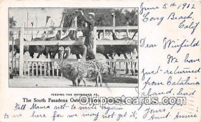 yan210052 - California, USA South Pasadena Ostrich Farm Postcard Post Card