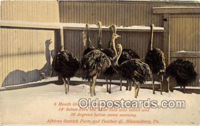 yan210085 - Bloomsburg, PA, USA Birds Eating Jan 13, 1912 Postcard Post Card