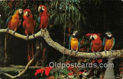 yan220001 - Miami, FL, USA She Blused Postcard Post Card