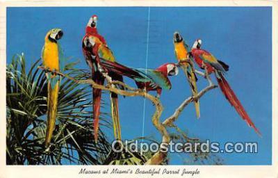 yan220002 - Miami, FL, USA Macaws, Parrot Jungle Postcard Post Card