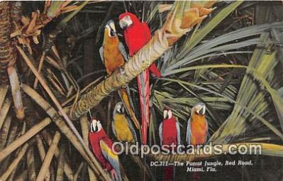 yan220006 - Miami, FL, USA Parrot Jungle, Red Road Postcard Post Card