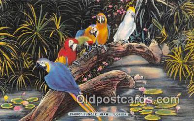 yan220009 - Miami, FL, USA Parrot Jungle Postcard Post Card