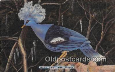 yan220012 - Miami, FL, USA Parrot Jungle Postcard Post Card