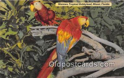 yan220016 - Macaws, Tropical Hobbyland Postcard Post Card