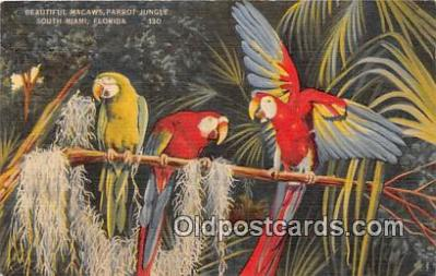 yan220019 - Miami, FL, USA Macaws, Parrot Jungle Postcard Post Card