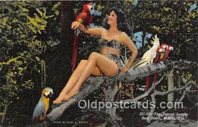 yan220020 - Miami, FL, USA Parrot Jungle, Red Road Postcard Post Card