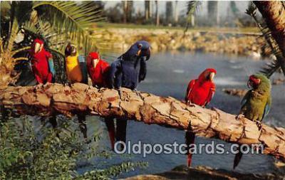 yan220021 - Tampa, FL, USA Busch Gardens Postcard Post Card