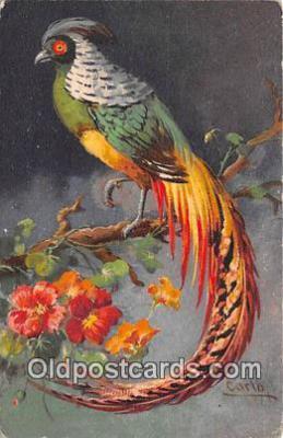 yan220027 - Artist Carlo Postcard Post Card