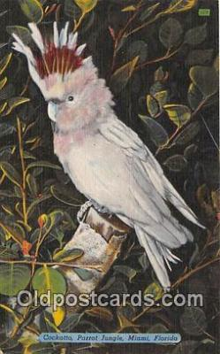 yan220028 - Miami, FL, USA Cockatto, Parrot Jungle Postcard Post Card