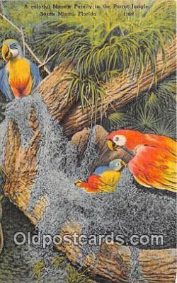 yan220045 - South Miami, USA Macaw Family, Parrot Jungle Postcard Post Card