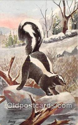 yan230008 - Harvey Skunk Postcard Post Card