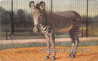 yan230011 - New York Zoological Park, USA Grevey Zebra Postcard Post Card