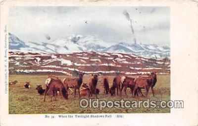 yan230021 - Elk Postcard Post Card