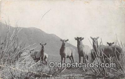 yan230022 - Rockies Wild Elk Postcard Post Card