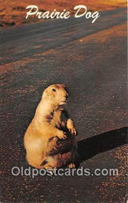 yan230036 - Wyoming, USA Prairie Dog Postcard Post Card