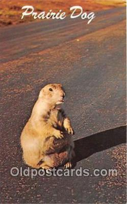 yan230038 - Wyoming, USA Prairie Dog Postcard Post Card