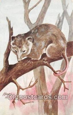 yan230045 - Harvey Virginia Opossum Postcard Post Card