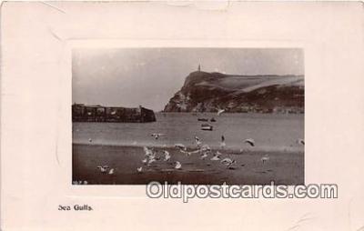 yan230047 - Sea Gulls Postcard Post Card