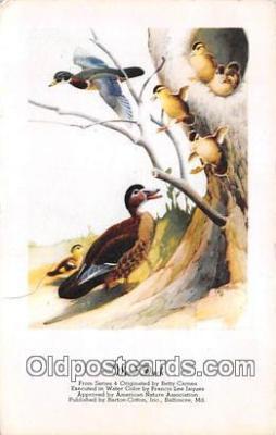 yan230049 - Wood Duck Postcard Post Card