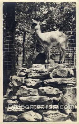 zoo001002 - Postcard Post Cards Old Vintage Antique