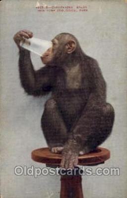 zoo001012 - Chimpanzee Badly, New York Zoological Park New York, USA Postcard Post Cards Old Vintage Antique