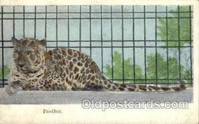 zoo001029 - Panther  Postcard Post Cards Old Vintage Antique