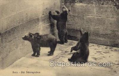 zoo001031 - Bern Der Barengraben  Postcard Post Cards Old Vintage Antique