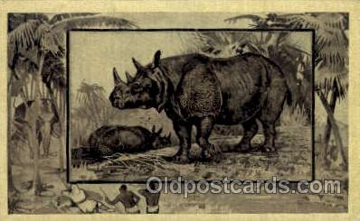 zoo001032 - Rhinoceros  Postcard Post Cards Old Vintage Antique