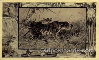 zoo001036 - Tiger  Postcard Post Cards Old Vintage Antique