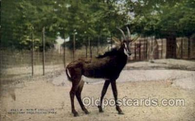 zoo001045 - Sable Antelope, New York Zoological Park New York, USA Postcard Post Cards Old Vintage Antique