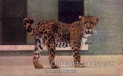 zoo001046 - Jagua Senor Lopez, New York Zoological Park New York, USA Postcard Post Cards Old Vintage Antique