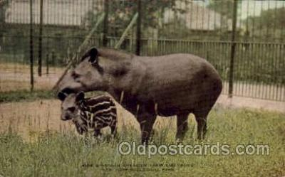 zoo001056 - South American Tapir & Young, New York Zoological Park New York, USA Postcard Post Cards Old Vintage Antique