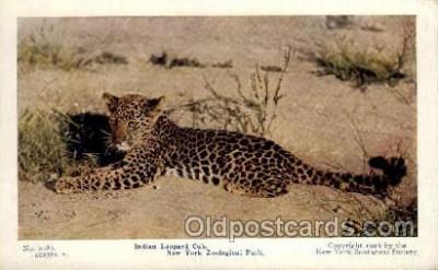zoo001058 - Indian Leopard Cub, New York Zoological Park New York, USA Postcard Post Cards Old Vintage Antique