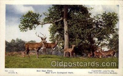 zoo001060 - Red Deer Herd, New York Zoological Park New York, USA Postcard Post Cards Old Vintage Antique