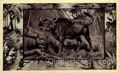 zoo001070 - African Buffalo Southern Africa Postcard Post Cards Old Vintage Antique