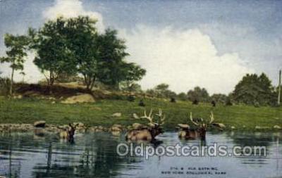 zoo001077 - Elk Bathing, New York Zoological Park New York, USA Postcard Post Cards Old Vintage Antique