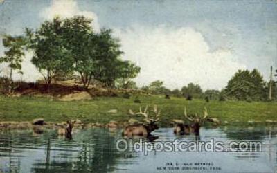 zoo001083 - Elk Bathing, New York Zoological Park New York, USA Postcard Post Cards Old Vintage Antique