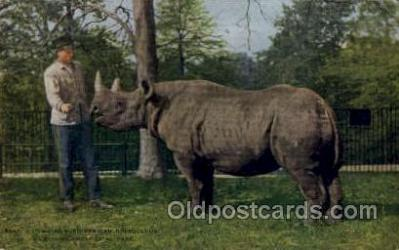 zoo001088 - African Rhinoceros, New York Zoological Park New York, USA Postcard Post Cards Old Vintage Antique
