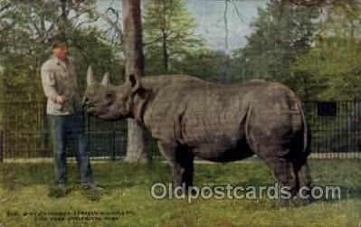 zoo001100 - African Rhinoceros, New York Zoological Park New York, USA Postcard Post Cards Old Vintage Antique