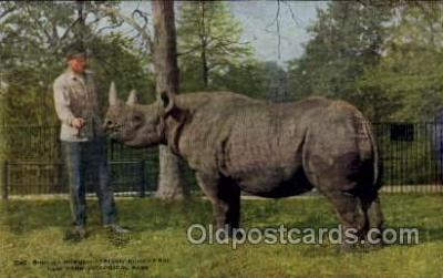 zoo001115 - African Rhinoceros, New York Zoological Park New York, USA Postcard Post Cards Old Vintage Antique