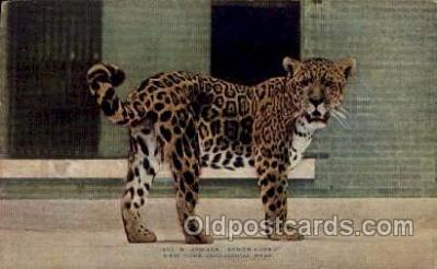 zoo001117 - Jagua Senor Lopez, New York Zoological Park New York, USA Postcard Post Cards Old Vintage Antique