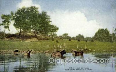 zoo001119 - Elk Bathing, New York Zoological Park New York, USA Postcard Post Cards Old Vintage Antique