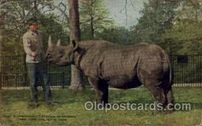 zoo001125 - African Rhinoceros, New York Zoological Park New York, USA Postcard Post Cards Old Vintage Antique