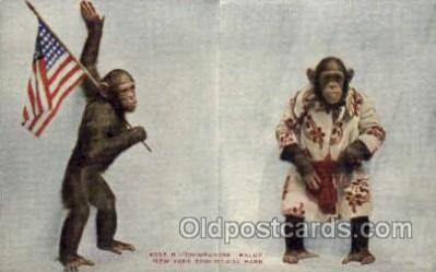 zoo001134 - Chimpanzee, New York Zoological Park New York, USA Postcard Post Cards Old Vintage Antique