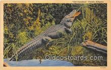 yan000020 - Florida, USA Old Cannibal Postcard Post Card